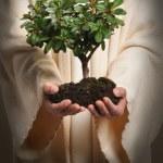 Jesus Hands Holding Tree — Stock Photo #14184296