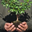 Man Holding Small Tree In Hands — Stock Photo