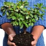 Man Holding Small Tree — Stock Photo