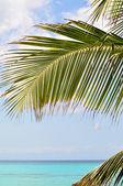 棕榈树分支在天堂 — 图库照片