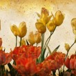 Grunge Vintage Tulips — Stock Photo