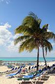 沙滩上的椰子树与巴哈马 — 图库照片