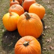 Pumpkins on the Ground — Stock Photo