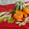 Royalty-Free Stock Photo: Harvest on Red Background
