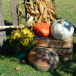 Pumpkins Still Life — Stock Photo
