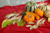 Harvest on Red Background — Stock Photo