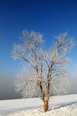Winter Landscape with Ice-Covered Tree — Stock Photo