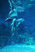Dolphins Playing — Stock Photo