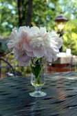 Peonies on a Table — Stock Photo