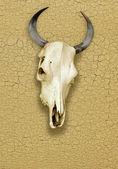 Schedel van stier over een gebarsten oppervlak — Stockfoto