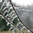 Stock Photo: Ice on Branch