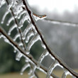 Ice on Branch — Stock Photo