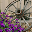 Stock Photo: Wagon Wheel and Flowers