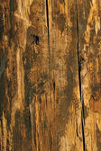 Grungy Wood in warn colors — Stock Photo