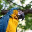 Macaw — Stock Photo #16860571