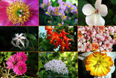 Flower Montage — Stock Photo