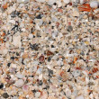 Background of Seashells — Foto Stock #18417419
