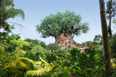 The Tree of Life at Disney World — Stock Photo