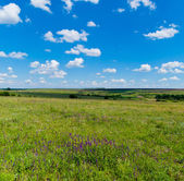 Pola trawy z kwiatami w promienie słoneczne i cienie chmur na — Zdjęcie stockowe