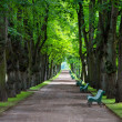 Tunnel of old lime-trees alley in park — Stock Photo #28800743