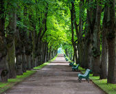Tunnel of old lime-trees alley in park — Stock Photo