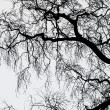 Stock Photo: Black Leafless Tree