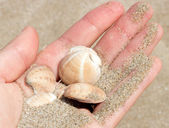 Sea shells — Stockfoto