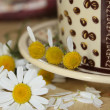 Foto de Stock  : Guessing on camomile