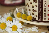 Guessing on a camomile — Stockfoto