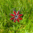 Red jewel in the grass - Stock Photo