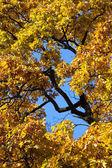 Autumn athosphere, yellow leafs — Stock Photo