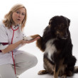 Doctor with dog — Stockfoto #34028303