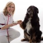 Veterinary with dog — Stock Photo #34028405