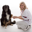 Veterinary with dog — Photo