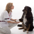 Veterinary with dog — Stock Photo