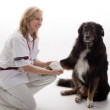 Doctor with dog — Photo