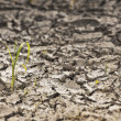 Parched earth with small plant — Stock Photo