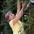 Older woman maintains her roses — Stock Photo