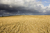 Crop field on hill — Stock Photo