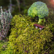 Stock Photo: Brocolli tree