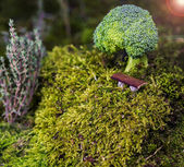 Brocolli tree — Stock Photo