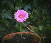 Flower in ceramics pot — Stock Photo