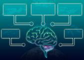 Brain illustration infographic — Stock Photo