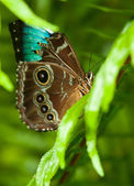 Tropical butterfly — Foto Stock