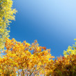 Colorful autumn trees — Stock Photo #14775625