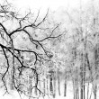 Snow-covered branch — Stock Photo #13805587