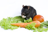 Rat, cheese and vegetables on a white background — Stock Photo
