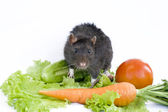 Rat and vegetables on a white background — Stock Photo