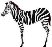 Vector Zebra — Stock Vector