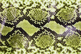 Snake skin pattern background — Stock Photo